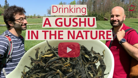 Drinking a mysterious Gushu in Nature