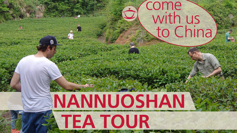 TEA JOURNEY: The first-ever Nannuoshan Tea Tour