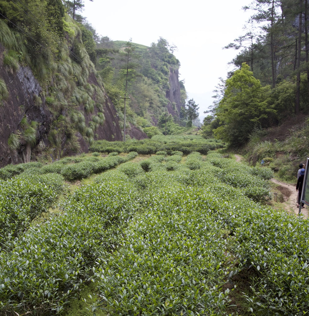 Wuyishan landscape, where Rock Tea (Yan Cha) is cultivated