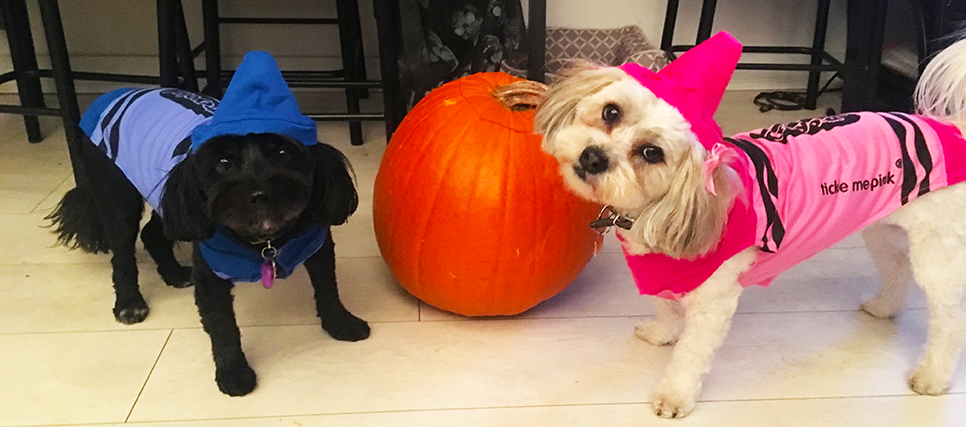 Make Sure Your Pets Have a Happy Howl-o-ween!