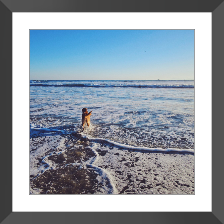 Tail of the Sea Glossy Print