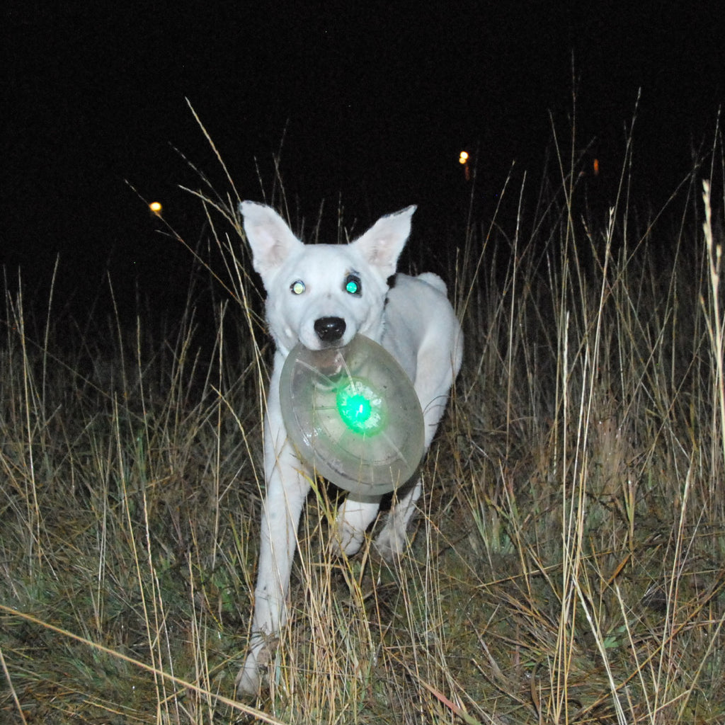 Dog Discuit LED Flying Disc - Flashflight.com - 2