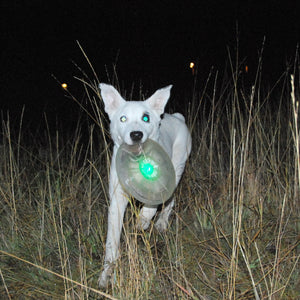 Dog Discuit LED Flashflight Light Up Flying Disc
