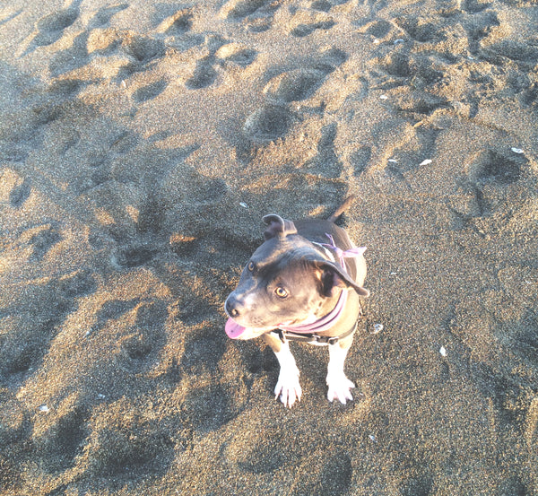 Shima on Moonstone Beach, CA