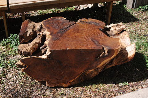 Russian Olive Stump Table