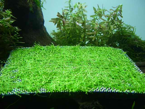 STAINLESS STEEL MOSS MESH