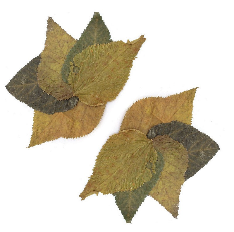 tantora mulberry leaves