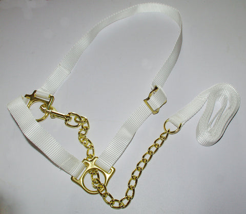 "Welsh Adjustable Show Halter-1"" Webbing/Brass Fittings-Standard & Sml"