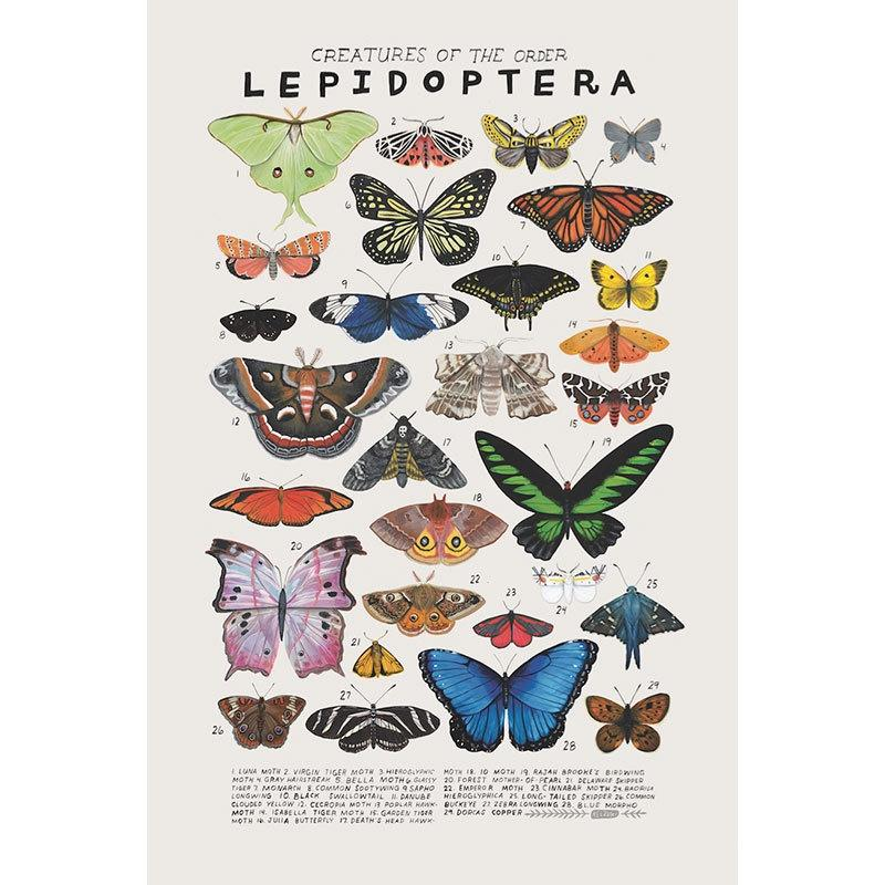 Creatures Of The Order Lepidoptera butterfly poster