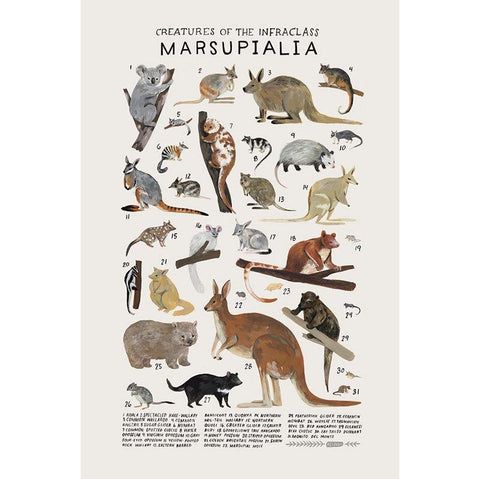 Creatures Of The Infraclass Marsupialia