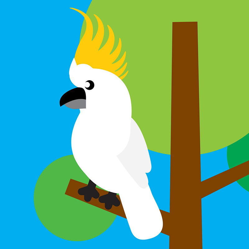 Scoops Card - Cockatoo in Tree