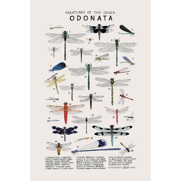 Creatures Of The Odonata