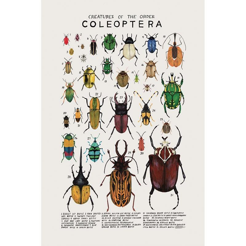 Creatures Of The Order Coleoptera