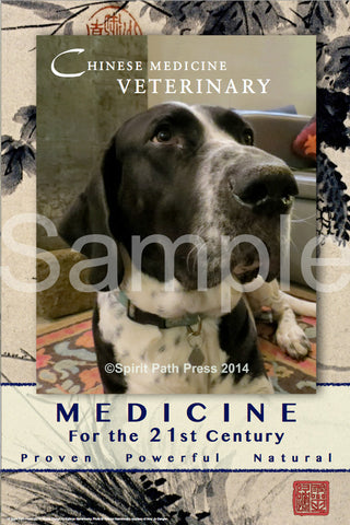 Poster: Chinese Medicine Veterinary