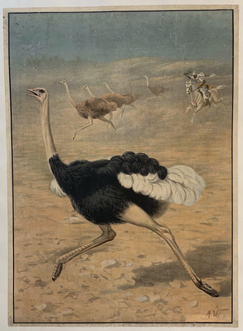 Chasing the Ostrich