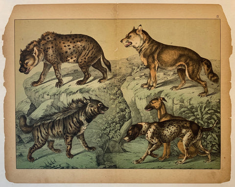 Schubert Wild Dog Lithograph