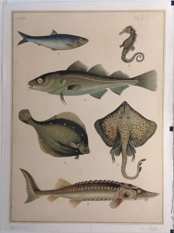 Fish Wall Art 1