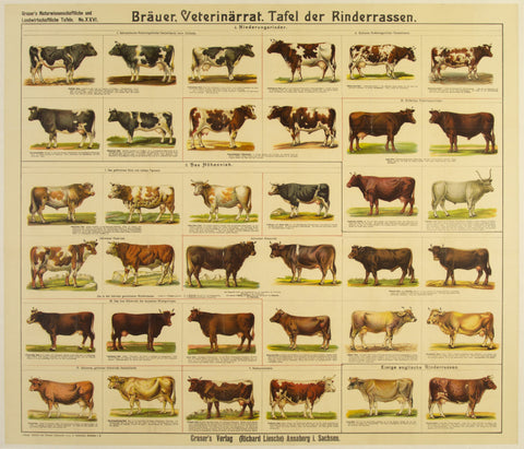 Cow Breeds