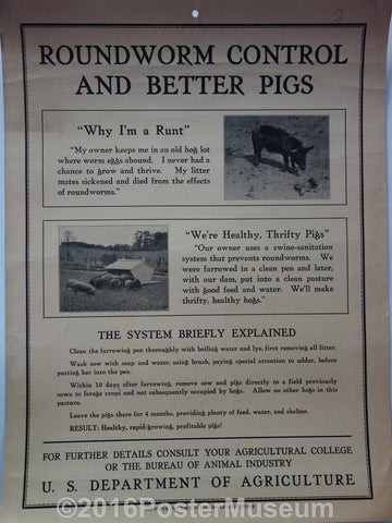 Roundworm control and better pigs
