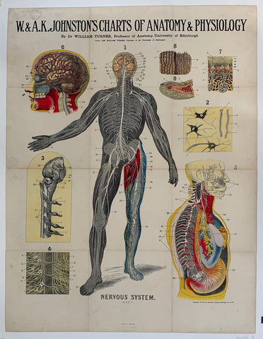 "W. & A.K. Johnston's Charts of Anatomy & Physiology ""Nervous System"""