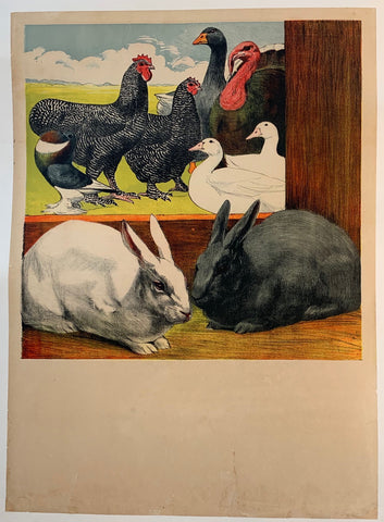Rabbits and Poultry