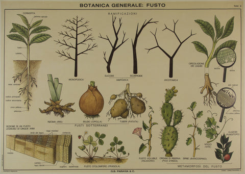 Botanical Analysis