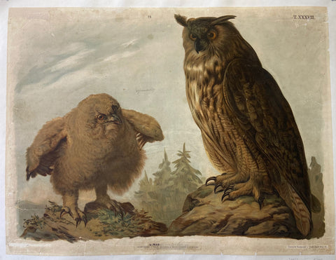 Print of two owls