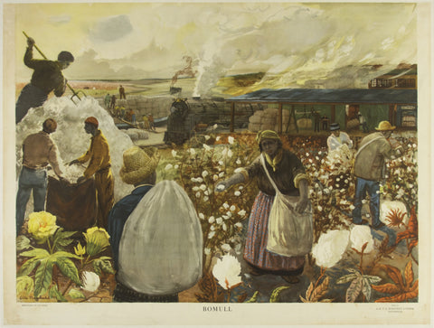 Bomull Cotton Picking