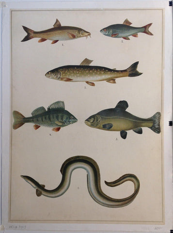 Fish Wall Art 2 - Poster Museum