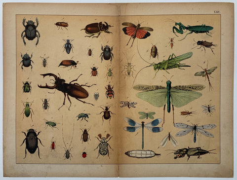 Insect Types