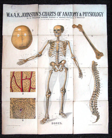 W. And A.K. Johnston's Charts Of Anatomy And Physiology - Plate 1: Bones