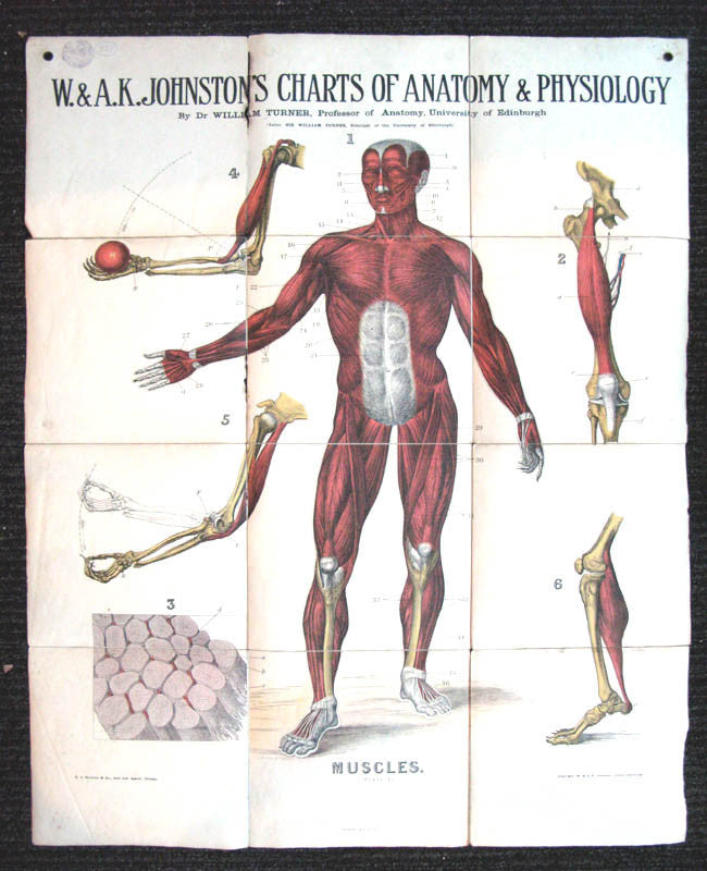 w and a k johnstonao s charts of anatomy and physiology plate 3 ...