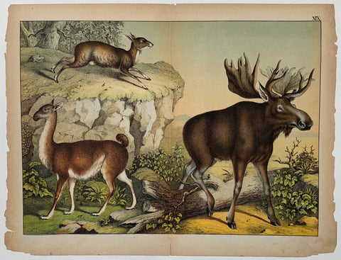 Schubert Moose Lithograph