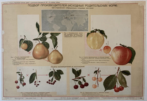 Russian Fruits Poster