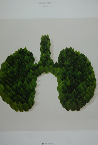 The Forest Is The Lungs Of The Earth