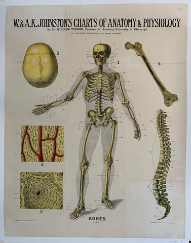 "W. & A.K. Johnston's Charts of Anatomy & Physiology ""Bones"""