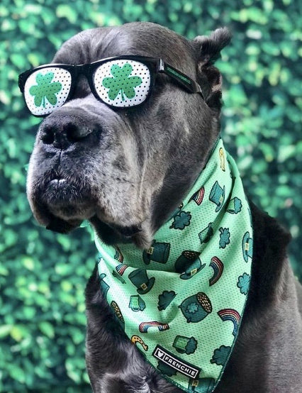 7 Lucky Irish Dog Breeds for St. Patty's Day Belly Rubs