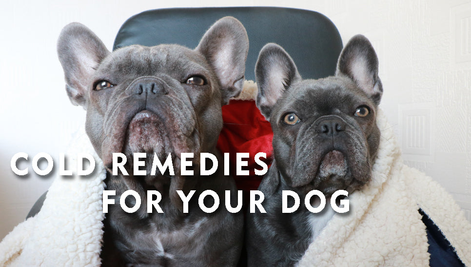Cold Remedies For Your Dog 🐶🤧