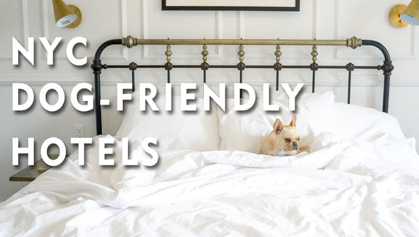 NYC- Dog Friendly Hotels - THE LIFE HOTEL