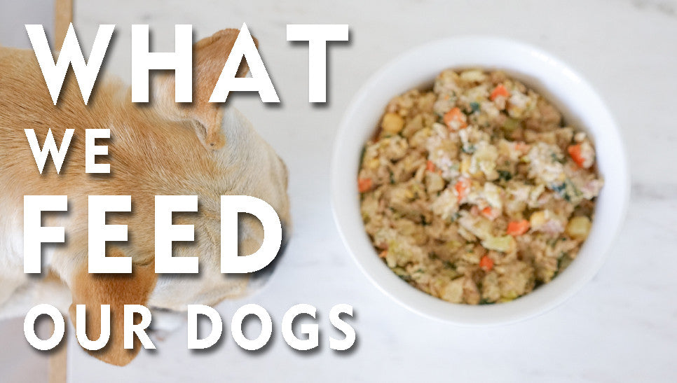 What We Feed Our Dogs