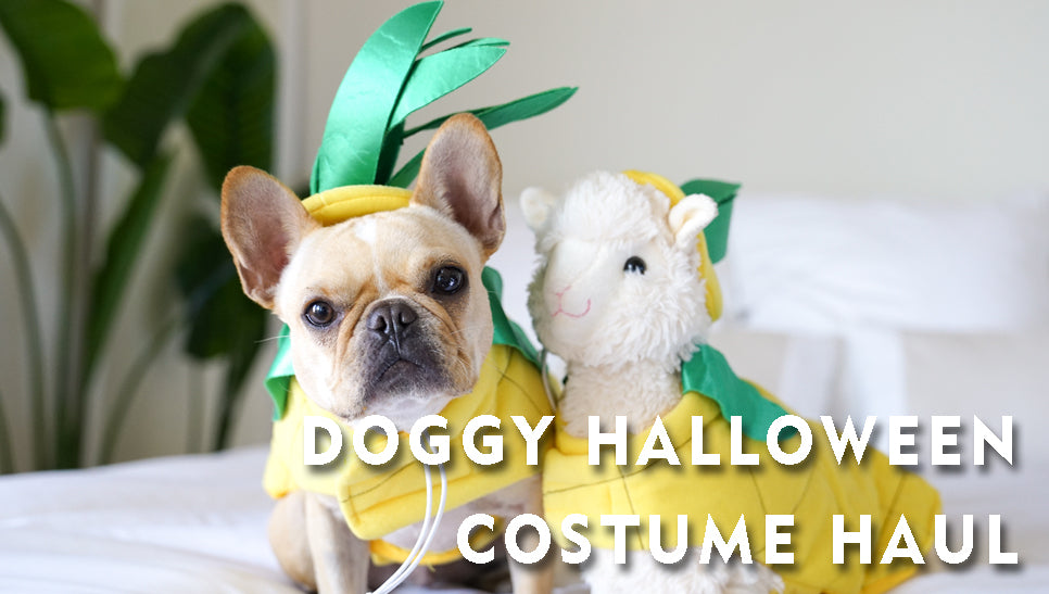 Doggy Halloween Costume Haul
