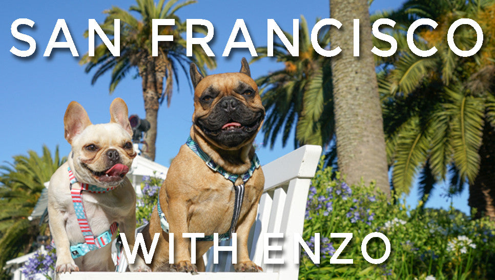 San Francisco with Enzo