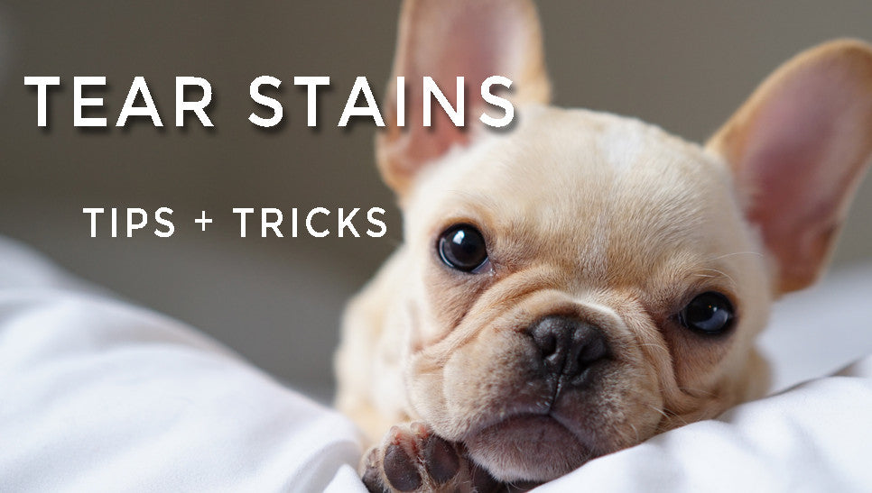 Tear Stains - Our Top Tips and Tricks