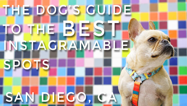 The Dog's Guide to the Best Instagrammable Spots - San Diego, CA