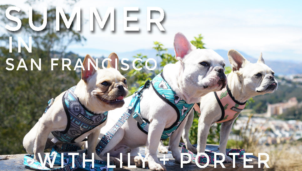 Summer in San Francisco  - Lily and Porter