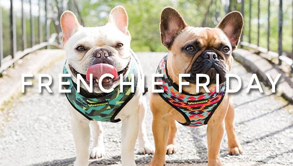Frenchie Friday!