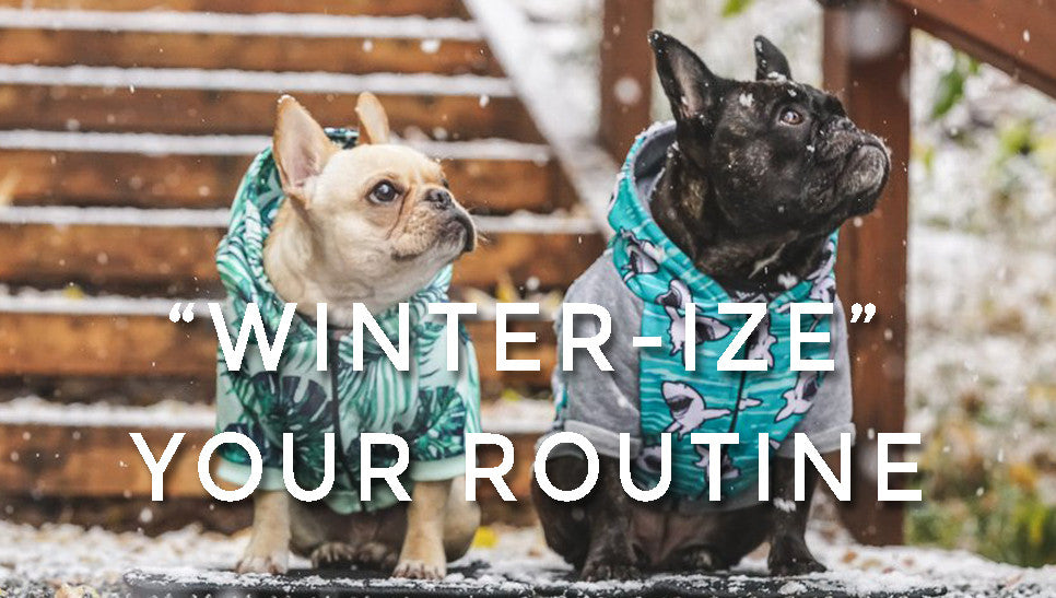 """Winter-ize"" Your Dog's Routine"