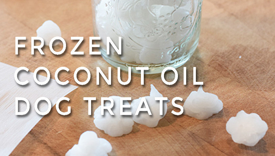 Frozen Coconut Oil Dog Treats!
