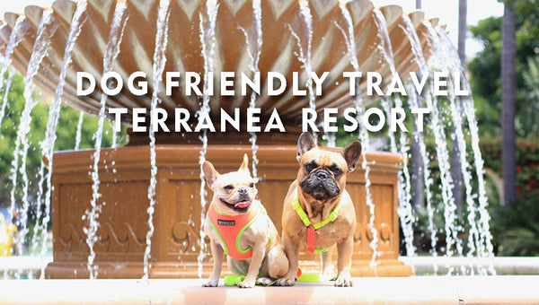 Dog Friendly Travel - Terranea Resort with Enzo and Leo