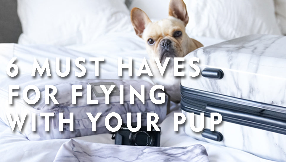 The 6 Must Haves for Flying with your Pup